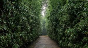 Seminario Under the Bamboo Tree 2019